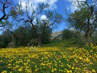 Primavera a Cornnudella
