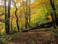 Tardor al bosc