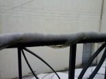 Temporal de neu als Ports i Terra Alta i llevantada al Delta Gandesa, Mercè Pujol Vallespí.