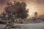 Obres guanyadores del XIX Premi de Fotografia de la Terra Alta 1r premi categoria Indrets de la Terra Alta: Andreu Gual Roca per l'obra: El testimoni de l'olivera