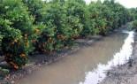 Baixen les barrancades per la pluja al Port