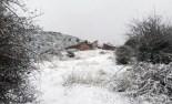 Més imatges de la nevada a les TE Mataredona. Josep Riba 'Lo Moreno'