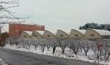 Més imatges de la nevada a les TE Gandesa. Lita Gresa