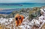 Més imatges de la nevada a les TE La Punta de la Banya. Rafa Baila