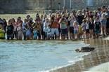 Alliberament de 3 tortugues babaues a la platja de les Delícies, a la Ràpita Foto: Eva Mascarell