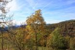 Paisatge i meteorologia de novembre al Ripollès Paisatges de tardor a Molló (2 de novembre). Foto: Marcel Urgell