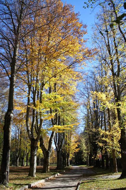 Paisatge i meteorologia de novembre al Ripollès El passeig Maristany de Camprodon (11 de novembre). Foto: Marcel Urgell