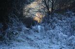 Paisatge i meteorologia de desembre al Ripollès L'entorn de la riera de Caganell de Ripoll absolutament glaçat (7 de desembre). Foto: Arnau Urgell