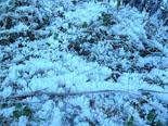 Paisatge i meteorologia de desembre al Ripollès Forta glaçada a l'entorn de Ripoll (16 de desembre). Foto: Antonina Coromina