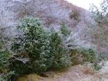Paisatge i meteorologia de desembre al Ripollès Glaçada a Sant Bernabé de les Tenes (30 de desembre). Foto: Antonina Coromina