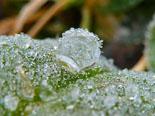 Paisatge i meteorologia de gener al Ripollès Glaçades a l'entorn de Ripoll (6 de gener). Foto: Antonina Coromina