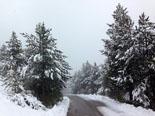 Paisatge i meteorologia de gener al Ripollès Carretera del collet de les Barraques (19 de gener). Foto: Jordi Campos