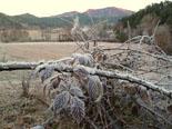 Paisatge i meteorologia de febrer al Ripollès Glaçada a l'entorn de Ripoll (3 de febrer). Foto: Antonina Coromina