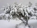 Paisatge i meteorologia de febrer al Ripollès Entorn dels Alabaus, al pla d'Anyella (16 d'octubre). Foto: N. Beltrán