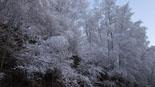 Paisatge i meteorologia de febrer al Ripollès Espinavell es lleva amb nu paisatge de neu i gel (17 de febrer). Foto: Eva Martínez-Picó/Can Jordi