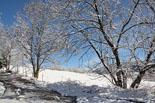 Paisatge i meteorologia de febrer al Ripollès Nevada a Molló (17 de febrer). Foto: Marcel Urgell