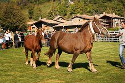Concurs Comarcal de Cavall Pirinenc del Ripollès a Llanars
