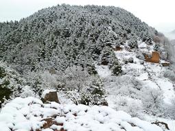 Nevada del 19-20 de gener al Ripollès