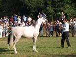 Arabequus 2010