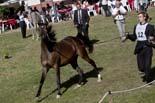 Arabequus de Sant Joan