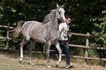 Arabequus