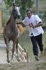 Arabequus 2