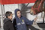 Concurs Comarcal de Cavall Pirinenc
