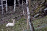 Parc dels Pirineus de Molló