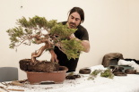 Exposició de bonsais de Sant Joan