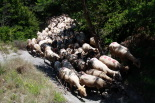Recuperació del camí ramader Alpens-les Llosses
