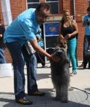 I Concurs Caní de Campdevànol