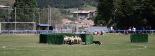 48è Concurs de Gossos d'Atura de Ribes de Freser