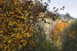 Esclat de la tardor al Ripollès Esclat de la tardor a Ripoll (1 de novembre). Foto: Arnau Urgell