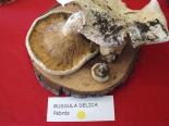Exposició de bolets de Campelles