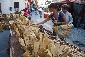XVI Festa de la Mel de Ribes de Freser