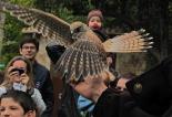 Festa dels Ocells del CEA Alt Ter