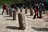 Festa del Pi de Matamala