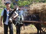 Festa del Segar i el Batre de Gombrèn
