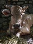 Fira del Bestiar de Ribes de Freser
