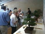 Festa Major de Sant Joan: fotos lectors Exposició de bonsais. Foto: Sergi Albrich