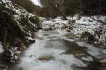 Rius glaçats per l'onada de fred El torrent de Caganell de Ripoll ben glaçat. Foto: Arnau Urgell