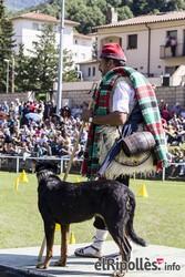 Concurs Internacional de Gossos d'Atura de Ribes de Freser