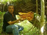 Ripollès: paisatge i meteorologia (juny-juliol 2011) Gírgola groga a Campelles. Foto: Lluís Rodríguez Sala