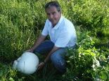 Ripollès: paisatge i meteorologia (juny-juliol 2011) Pet de llop a Campelles. Foto: Lluís Rodríguez Sala