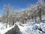 Nevada del 28 i 29 de gener El camí de Ribesaltes ple de neu. Foto: Arnau Urgell