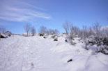 Nevada del 28 i 29 de gener Paisatges nevats a Molló. Foto: Marcel Urgell