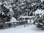 Nevada del 28 i 29 de gener Entorns de Planoles nevats. Foto: Jordi Campos