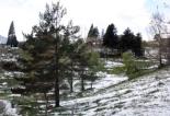 Temporal de neu i vent del 4 de maig Enfarinada a Planoles. Foto: Marc Riera/ACN
