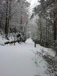 Llevantada 28 de febrer i 1 de març Sant Antoni de Camprodon ben blanc (divendres). Foto: Tània Penas
