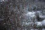 Nevada del 31 de gener al Ripollès Ripoll s'ha aixecat emblanquinat. Foto: Arnau Urgell